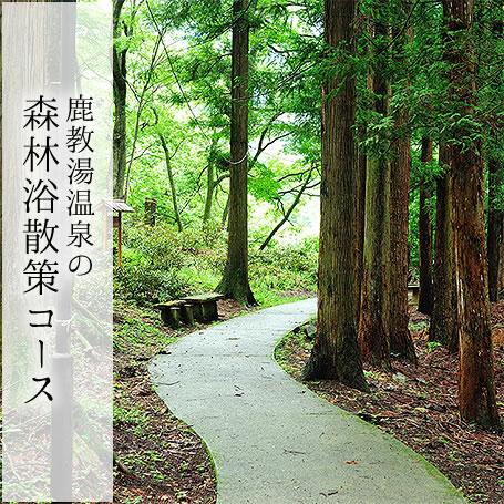 森林浴散策コース
